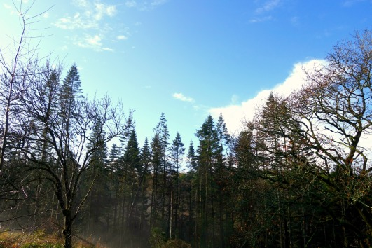 A Blue Sky in the Forest at Bluestone Wales