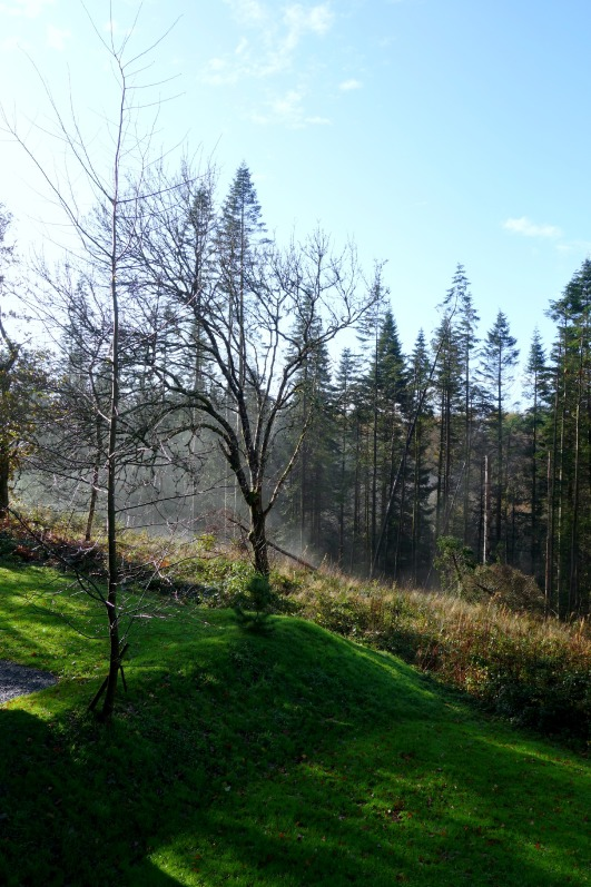 The Forest at Bluestone Wales