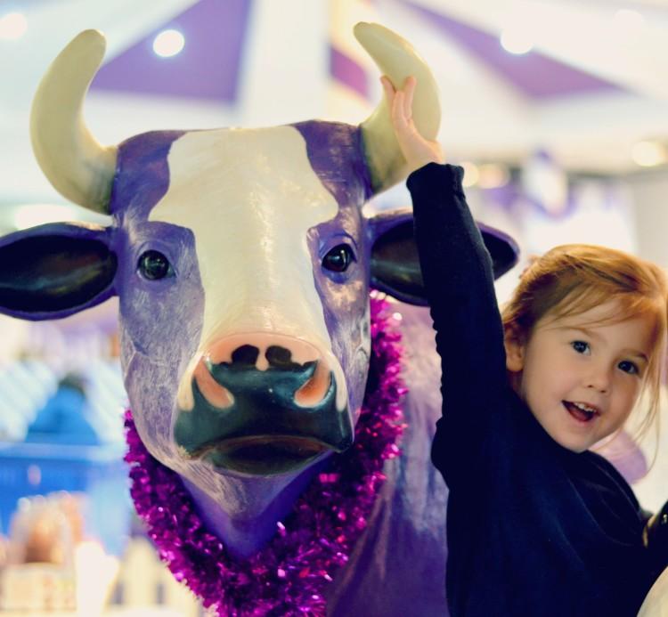 with a cadbury cow