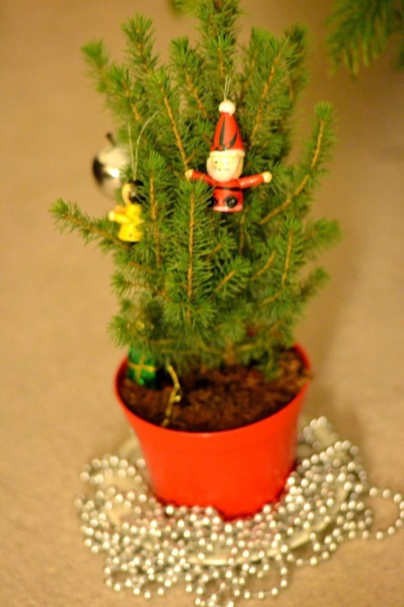pines and needles mini tree