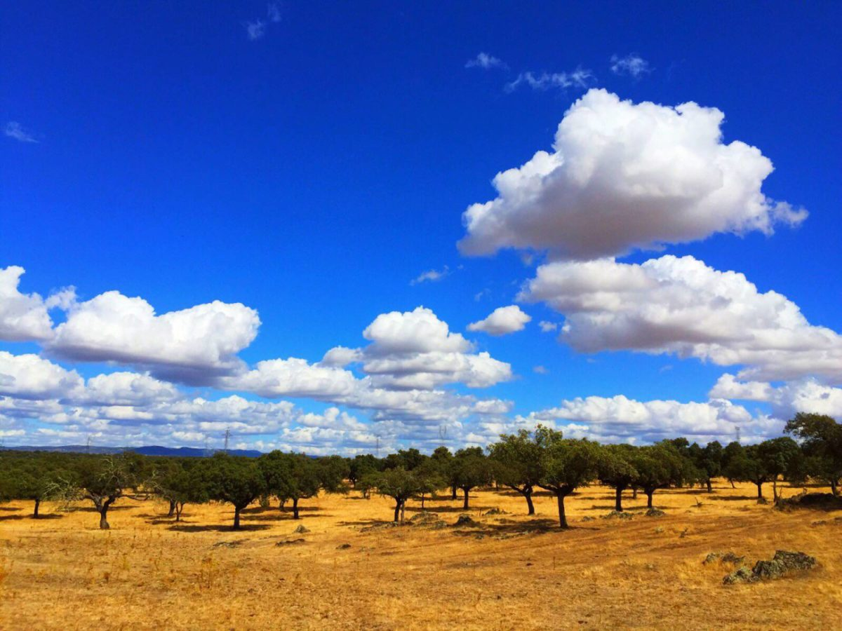 blue skies and sunshine in Spain