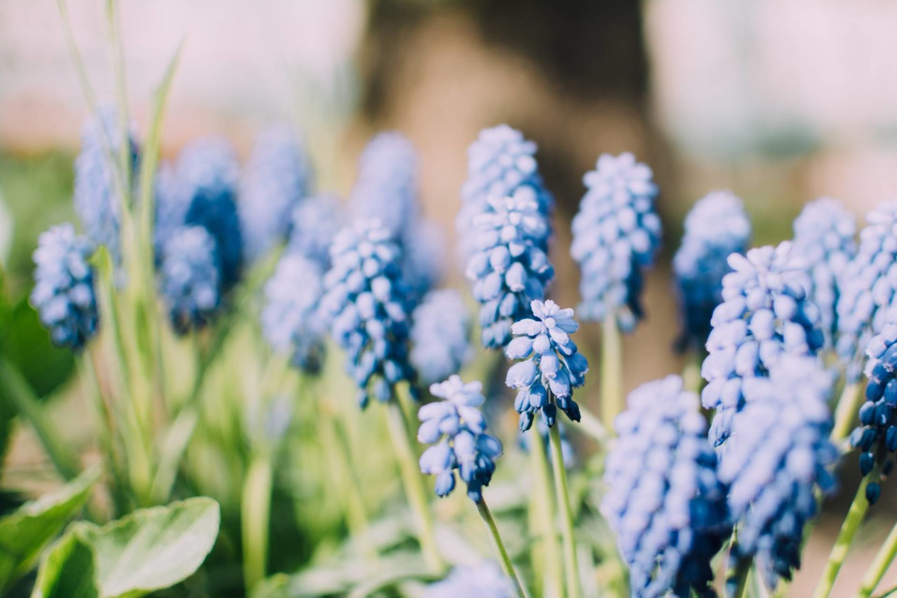 unsplash bluebells
