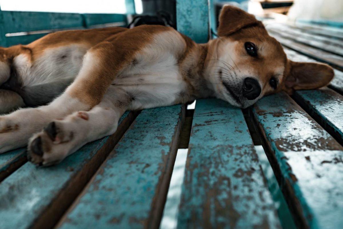 puppy_unsplash